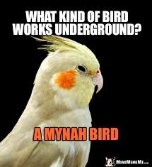 Funny Bird Memes - funny bird jokes avian humor cheep birdie laughs pg 1 of 2