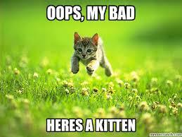Oops Meme - kitten