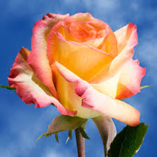 roses online order yellow and orange roses online global