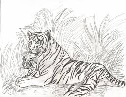 drawn tiiger female tiger pencil and in color drawn tiiger