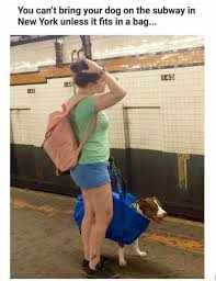 Subway Memes - dopl3r com memes you cant bring your dog on the subway in new