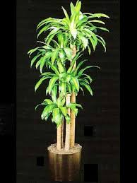 low light indoor plants indoor plants gallery the potted plant scottsdale interior