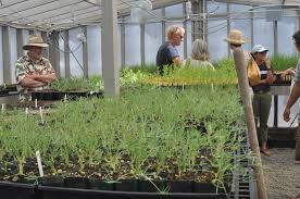 propagating native plants new native plant greenhouse at palo alto baylands bolsters