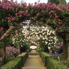 mottisfont abbey rose garden hampshire uk an outstandi u2026 flickr