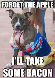 Dog Bacon Meme - memes from disney side dog s day at magic kingdom