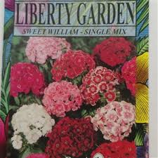 sweet william flowers william flowers 1 packet