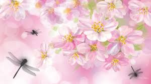 wallpapers tagged with dragonflies white shutter dragonflies