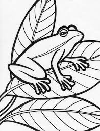 impressive frog pictures to color best colorin 6605 unknown