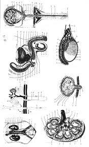 100 anatomy and physiology final exam answer key ap biology