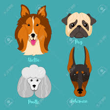 types of dogs different breeds of dogs sheltie poodle pug and doberman dog