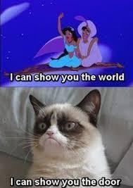 No Grumpy Cat Meme - grumpy cat know your meme laser pointer humor quotes