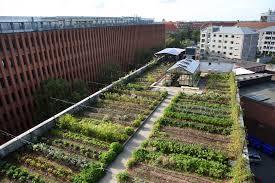 Roof Garden Plants østergro