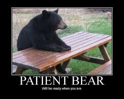 Bear Memes - patient bear 01 patient bear bear sitting at table know your