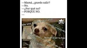 Memes De Chihuahua - viral memes del chihuahua enojado se apodera de las redes sociales