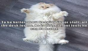 Cute Funny Cat Memes - i can has cheezburger new years funny animals online cheezburger
