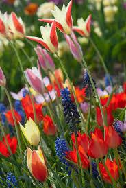 Bridgeport Carpet Tulip Bulbs Item 6050 Aladdins Carpet For Sale