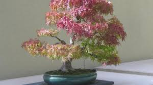 ornament stunning plants and trees for sale cheap seeds annuals