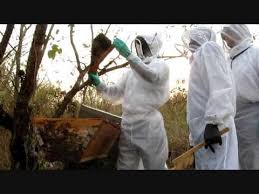 Harvesting Honey From Top Bar Hive Harvesting Top Bar Hive Honey In Uganda Part 2 Youtube