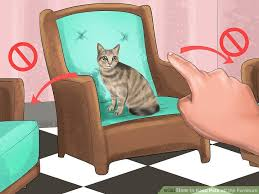 Why Does My Cat Sleep On My Bed 4 Ways To Keep Pets Off The Furniture Wikihow
