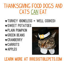 thanksgiving food for dogs and cats irresistible pets