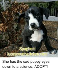Puppy Eyes Meme - sad puppy eyes meme puppy best of the funny meme
