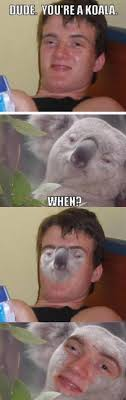 Really High Guy Meme - high man and his koala imgur