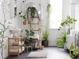 indoor plants clean fresh u0026 beautiful environment living local