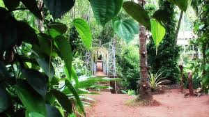 Indoor Spice Garden by Spice Garden In Sri Lanka Youtube