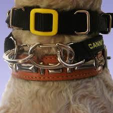 australian shepherd 2 nasen canny collar best dog head collar to stop pulling canny company