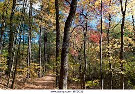Massachusetts forest images Concord ma stock photos concord ma stock images alamy jpg