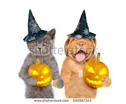 Pet Cat Halloween Costume Pet Halloween Costume Stock Images Royalty Free Images U0026 Vectors