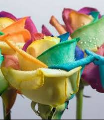 tie dye roses tie dye roses the rainbow roses available same day flower