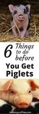 25 best pig farming ideas on pinterest farms pig pen and small