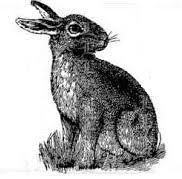 vintage rabbit free vintage rabbit clipart