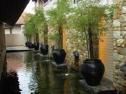 i like the bamboo in pots bamboo landscaping ideas google