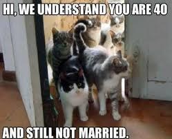 Crazy Cat Memes - 10 best crazy cat lady images on pinterest crazy cat lady crazy