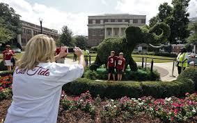 Mickey Mouse Topiary In Lieu Of Live Elephant University Of Alabama Has A Leafy One