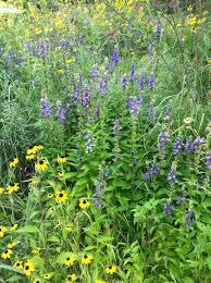 native plant restoration services jada u0027s garden