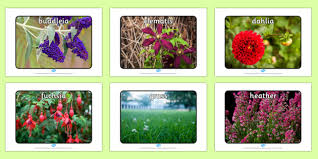 name a variety of common wild and garden plants 2014 page 1