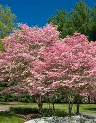 choosing best trees for landscaping