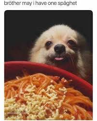Spaghetti Meme - the best spaghetti memes memedroid