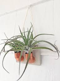 Wall Plant Holders Copper Concrete Air Plant Holder Air Plant Wall Holder Crafts