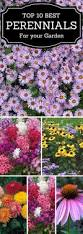 best 25 fall flower gardens ideas on pinterest summer bedding
