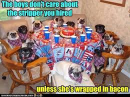 Strippers Meme - animal capshunz strippers funny animal pictures with captions