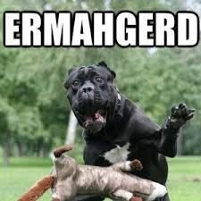 Ermahgerd Animal Memes - ermahgerd by kognak meme center