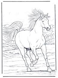 323 coloring pages animals images coloring