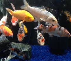 local fish and aquarium stores in pa fishstoresnearme com