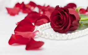 Rose Flower Images Rose Flower Images Free Download Hd Download