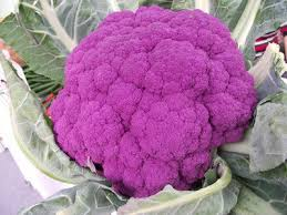colorful broccoli seeds green cauliflower seed fruit potted garden