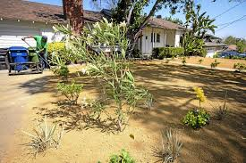 Drought Friendly Landscaping by Drought Tolerant Landscaping Archives Page 2 Of 2 Cadrought